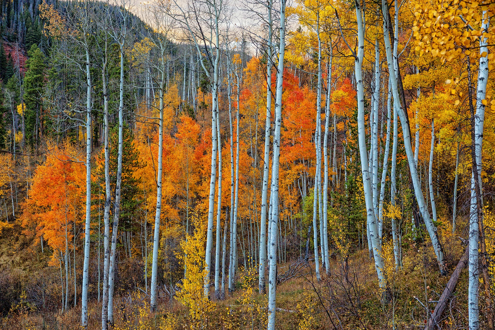 Fall-Aspens-Piney